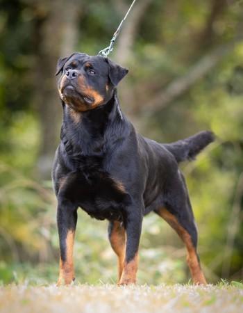 Nossos Cães Peddy