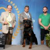 Galeria de Imagens: Zeus - 2 Best in Show - Exposição CBKC