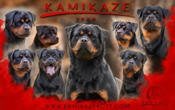 Galeria de Imagens: Banner Divulgação Kamikaze