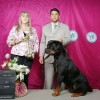 Galeria de Imagens: Zeus - Best in Show - Campinas KC - Sra. Francis Smith